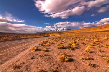 Pastos de Atacama