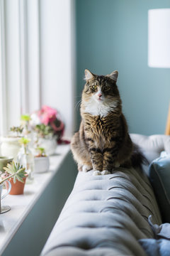 cat on sofa in windowlight