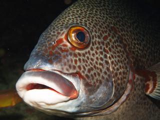 Fish mouth upclose
