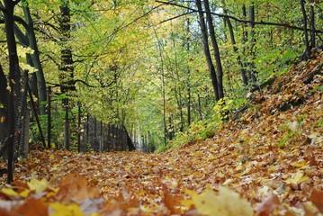 Fototapeta Pejzaż jesienny obraz