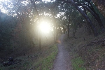 Shiloh Ranch Regional Park in southeast Windsor features a rugged landscape in the foothills of the Mayacamas Mountains. The park includes oak woodlands, forests of mixed evergreens,.
