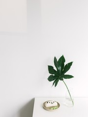 Still life of table, green plant and panda rice cake