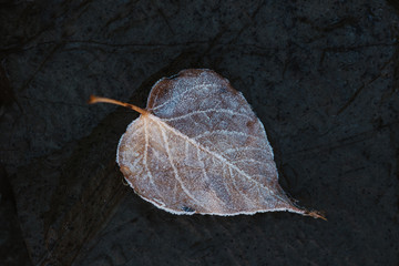 Leaf on ground covered in frost.