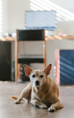 Dog Sitting in Study Room