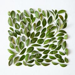 square frame of green leaves