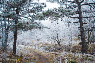 woodland path way in hoar frost and fog at winter