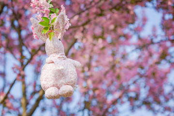 Rabbit doll hanging on a Begonia flower, background is pink