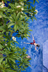 Swimming in a frangipani lined swimming pool in summer