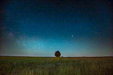 Blue Night Starry Sky Above Lonely Tree In Meadow. Glowing Stars