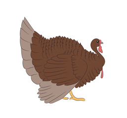 vector image of a brown turkey, vector, white background