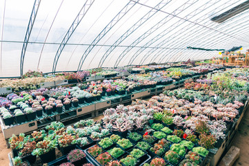 Succulents greenhouse