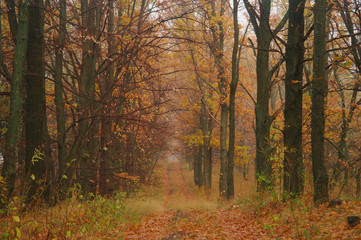 autumn forest with misty morning