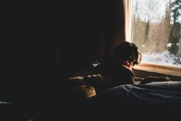 In a winter window