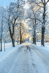Winter road through a tree avenue