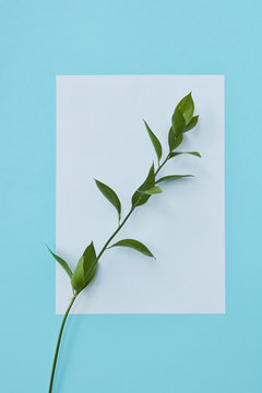 white card with a green branch