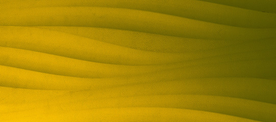 yellow color leather background or texture