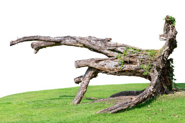 As part of the trunk or branches of large trees that fall or are cut off. Wall mural