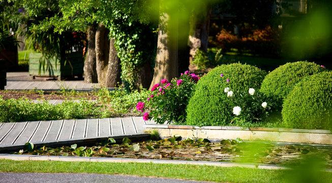 Petit jardin et buis au soleil