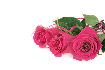 Laying red pink rose arrangement isolated on white. Three flowers of human feelings, love and beauty. Tender petals, green leaves. Greeting card concept.