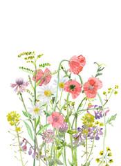 beautiful meadow flowers. watercolor painting