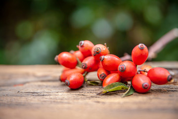 Fresh rosehip on wood rustic background in daylight