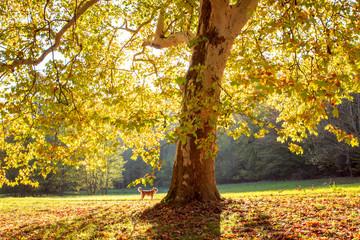 Golden Autumn tree Landscape Nature fall Season