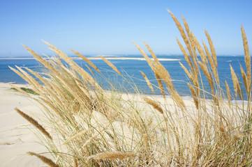 Spighe di grano sul mare