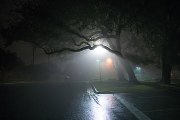 City Night Fog Fotomurales
