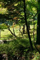 The leaves turn red with yellow and green leaves background in Japanese garden (Koishikawa Korakuen, Tokyo, Japan)