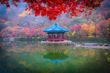maples leaves in autumn at naejangsan mountain South Korea