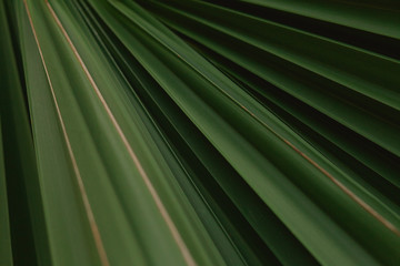 Close up showing color and texture of a tropical leaf