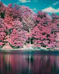 Infrared Lake and Forest