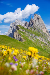 Dolomites Alps in springtime, green grass and flowers, Seceda mount in background. Trentino Alto Adige, Italy