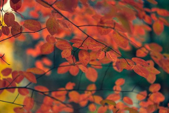Gorgeous, vibrant, glowing orange and yellow fall foliage