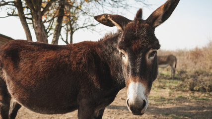Donkey On The Countryside