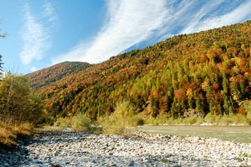 Herbstwald am Flussufer