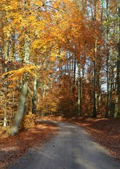 Weg führt durch leuchtend bunten Herbstwald