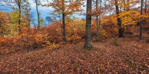 Laubwald im Herbstlaub