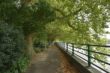 Thames path and Thames river along Bishop's Park in Fulham, London, U.K Wall mural