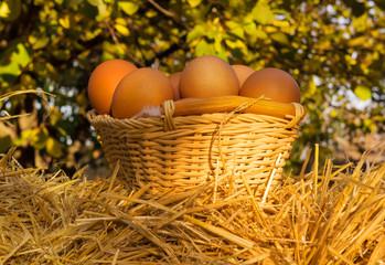 Chicken eggs on basket