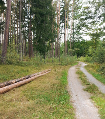 Forest path with long logs: Hiking trail in the forest with long tree logs