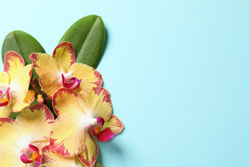 Beautiful orchid flowers with leaves on color background, top view with space for text. Tropical plant