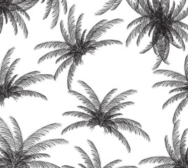 Palm silhouette on White Background. Vector illustration