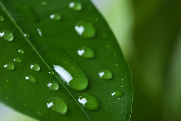 View of water drops on green leaf, closeup