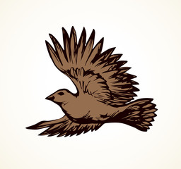 Vector drawing. Small titmouse