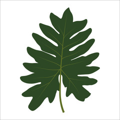 Green leaf on white background. Vector Illustration