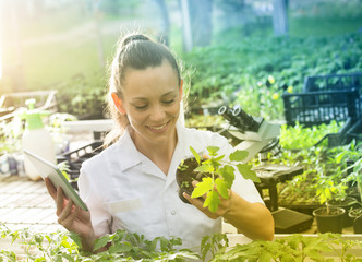Woman agronomist with tablet and microscope in greenhouse