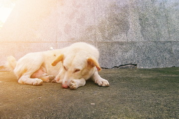 A dog laying down on a concrete floor with sunlight background