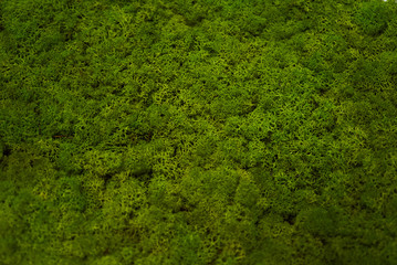 Green moss grass texture background with copy space