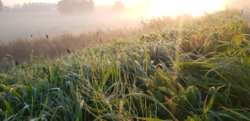 Dew drops on the grass at the dyke with fog and sun beams in the Fog in Moordrecht